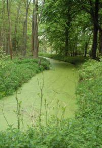 Développement durable dans F-Environnement eutrophisation